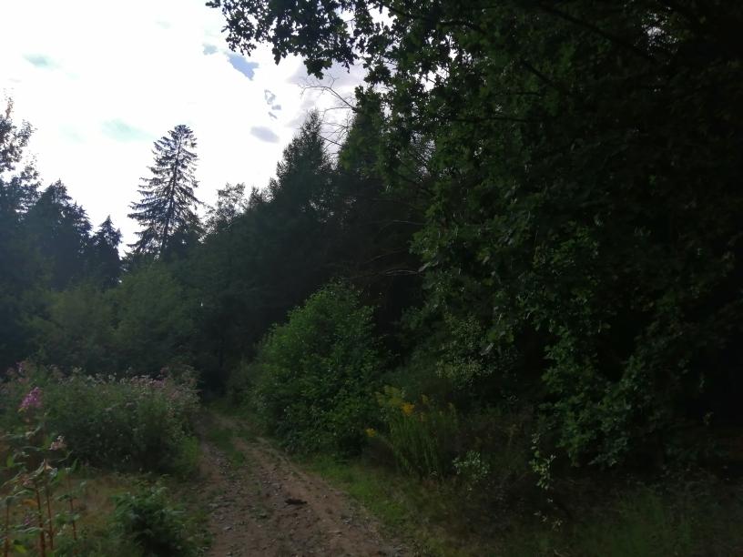 Lesní pozemek Dolní Poustevna